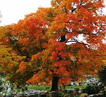 Autumn, Mount Royal, Montreal by Naomi Slater