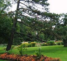 Spring, Halifax Public Gardens by Naomi Slater