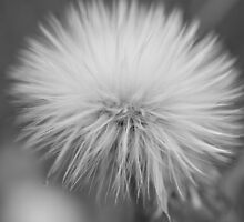 Fluff by Steve St.Amand