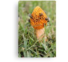 Yellow Mushroom Canvas Print