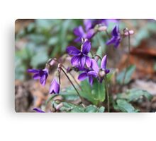 Group of Purple Flowers Canvas Print