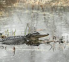 Gator Day by Carol Bailey White