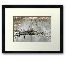 Gator Day Framed Print