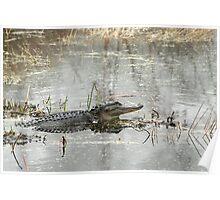 Gator Day Poster