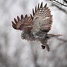 Can Voles Fly? by Gary Fairhead