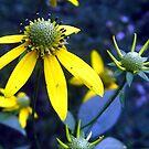 golden spikey...? by LoreLeft27