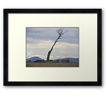 A lonely lean Framed Print