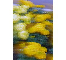 Marigolds - Movement, Denmark  Western Australia Photographic Print