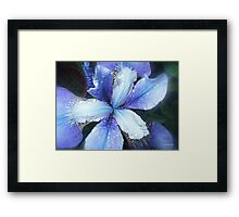 Why Does It Always Rain On Me! Framed Print