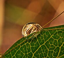 Golden Droplet  by Joey Kuipers