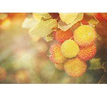 Irish Strawberries Photographic Print