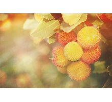 Irish Strawberries Photographic Print