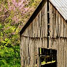Springtime In Kentucky by Mary Carol Story