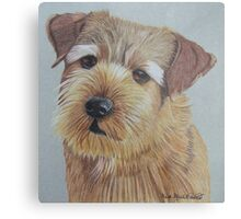 Norfolk Terrier Metal Print