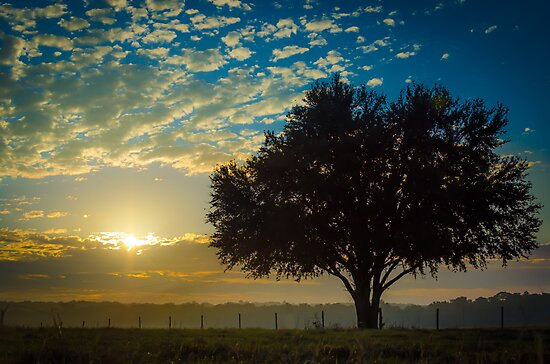 Autumn Sunrise by Douglas Hamilton