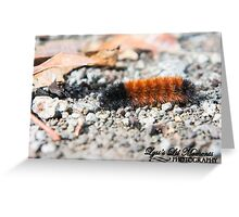 Woolly Worm  Greeting Card