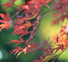 red leaves by AnnaGo