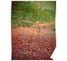 Autumnal Beauty Poster