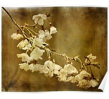 Almost Spring Blossoms Poster
