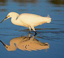 Snowy Egret by imagetj