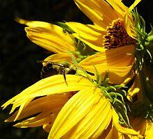 Bee In Hiding by WildestArt