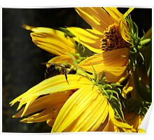 Bee In Hiding Poster