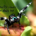 The Spider's Story by Betsy  Seeton