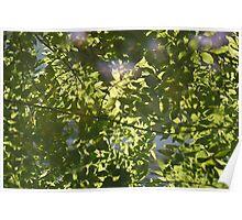 Leaves Reflection, Chernobyl Poster