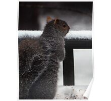 Squirrel Tales #7351 Poster