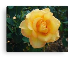 Gold-Kissed Rose Canvas Print