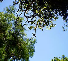Lone Bird On A Limb Is Not God In A Photograph?  by Robert Phillips