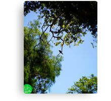 Lone Bird On A Limb Is Not God In A Photograph?  Canvas Print
