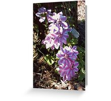 Clematis 'Nelly Moser' Greeting Card