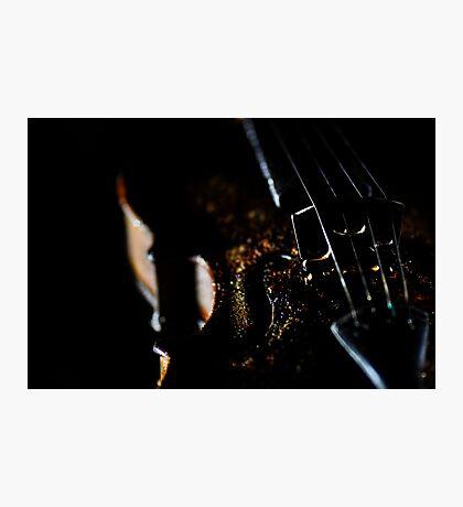Richard Stanton's forgotten violin Photographic Print