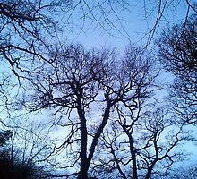 Gnarly Llansteffan woodland by Hywel Edwards