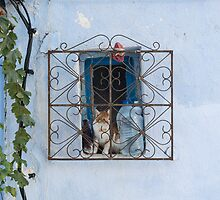 Blue cat behind bars by Mark Sykes