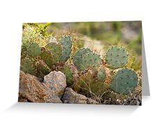 Chihuahuan Desert Plants-6 Greeting Card