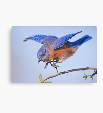 Little Blue Flying Machine Canvas Print