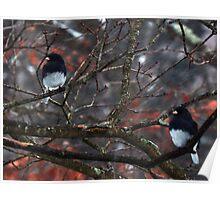 Snow Birds #7375 Poster
