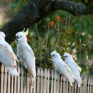 Fence Chatter  by Margaret Stanton