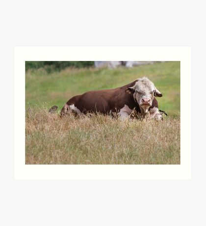 Bull with Feathered Friend Art Print