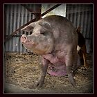 RUBY, THE GENTLE PIG, is not talking because....... by Barbara  Jean