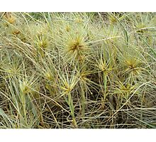 Prickly but Beautiful Photographic Print