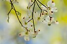 Spring Perspective by NatureGreeting Cards ©ccwri