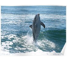 Dolphin at Play Poster