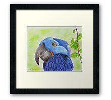 Blue Smiling Parrot on Green leaves Background Framed Print