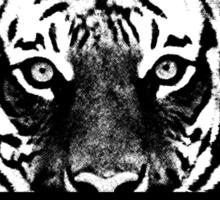 Tigers Roar Sticker