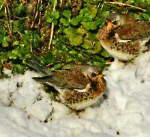 Fieldfares in the snow by missmoneypenny