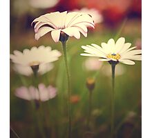 Field of Paper Flowers Photographic Print