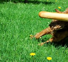 My cockier spaniel Sophie by KateSecretwomen